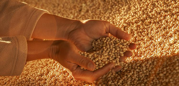 Image crop d'une présentation de grain de qualité